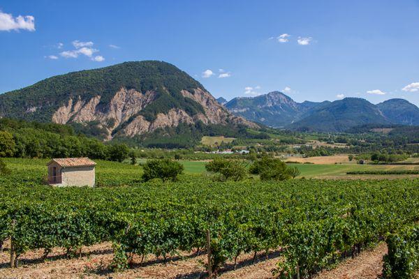 Vignes de Châtillon-en-Diois