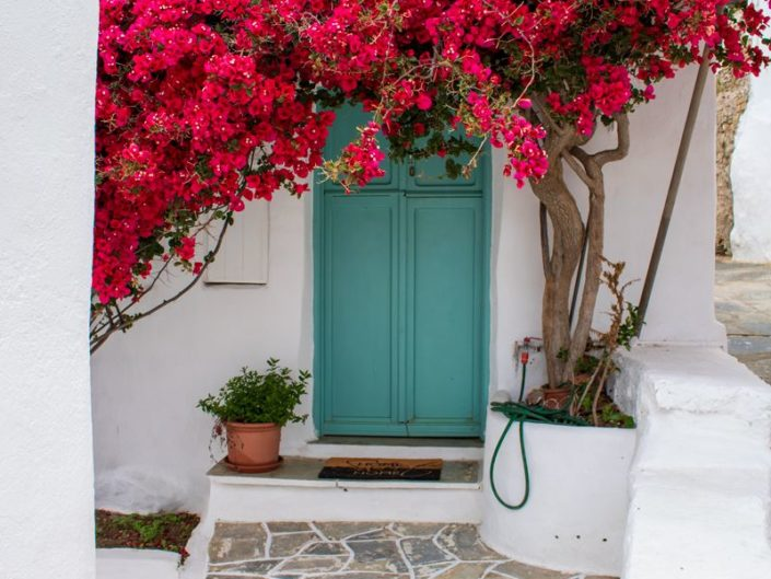 Bougainvillier dans le village de Faros, sur l'île de Sifnos